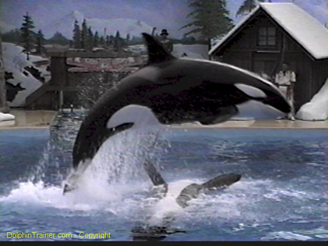 Pictures of dolphins - orca dolphin 3